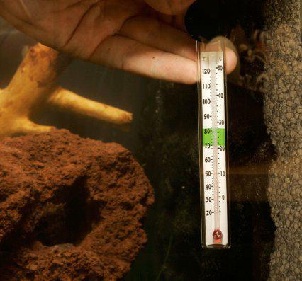 Температура для рыбок в аквариуме