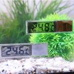 Какая температура в аквариуме подходит рыбкам?